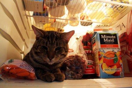 Коты в холодильниках (27 фото)