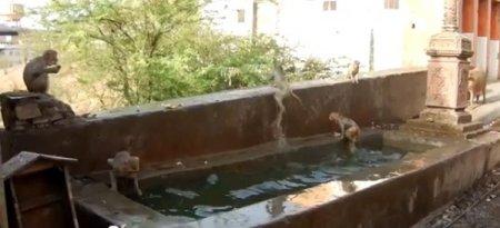 Водный аттракцион для обезьянок