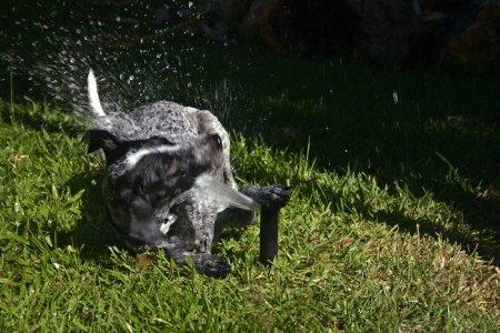 Собаки против брызгов