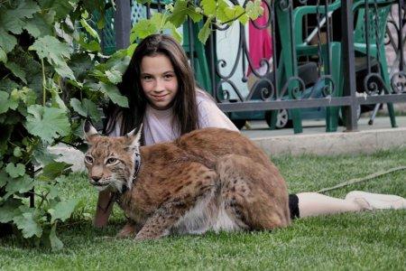 Домашняя рысь из Калуги