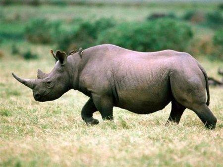 8 видов животных, вымерших за последние годы