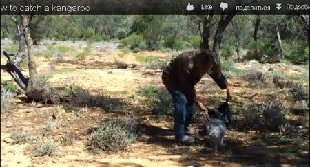 Как поймать кенгуренка