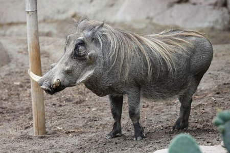 Самые некрасивые животные
