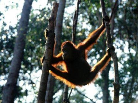 Забавные приматы