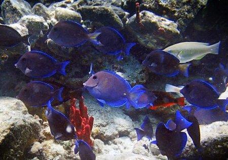 Плаванье с рыбами