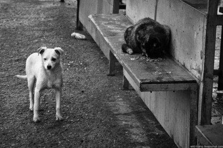 Бродячие псы