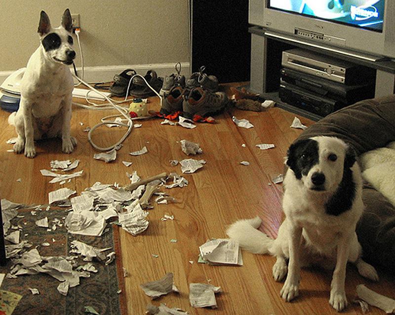 Что делают животные пока хозяев нет дома