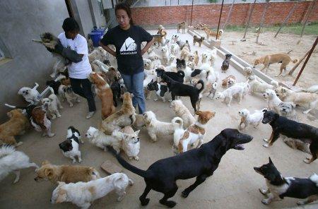 Приют для бездомных животных в Нанкине