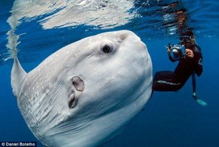 Огромная рыба-луна