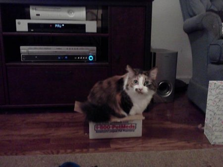 Идеальные места для котов