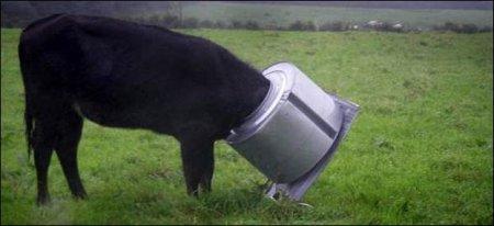 Животные, попавшие в трудное положение