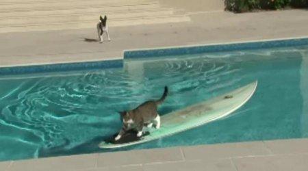 Кот-серфингист