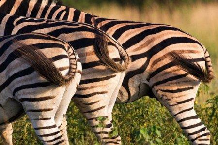 Редкие фотографии дикой природы