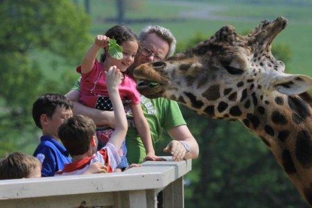 Покорми жирафа с рук!