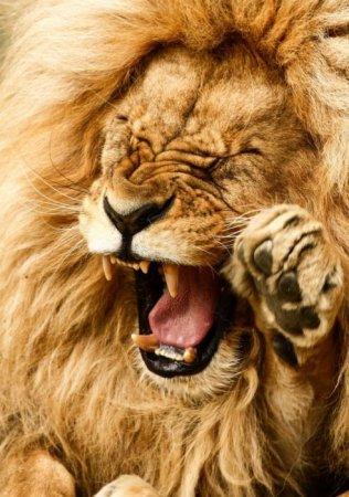 Удивительные фотографии животных (27 шт)