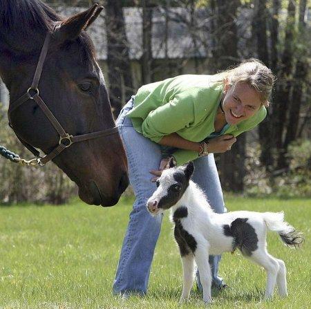 Эйнштейн – самая маленькая лошадка