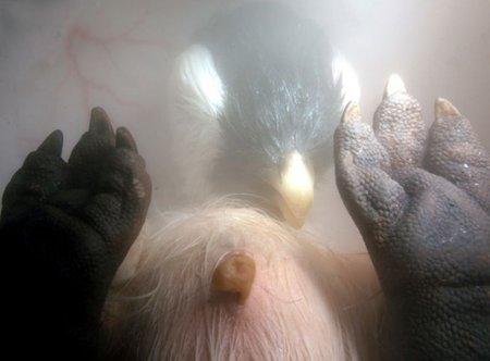 Эмбриональные фотографии животных