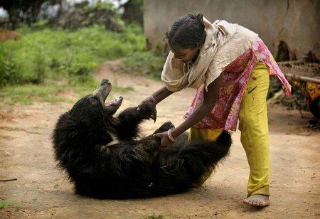 Медведь в индийской семье