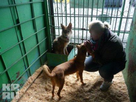 Трогательная история про собаку и волчонка
