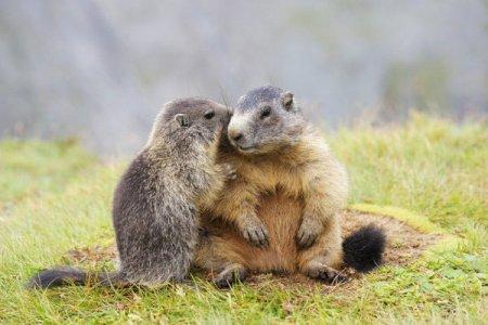 Животные объятия