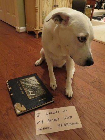 Провинившиеся собаки