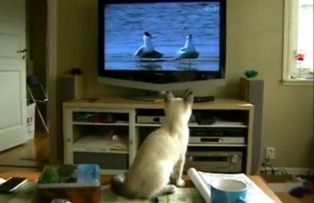 Кошка ловит телевизионных птичек