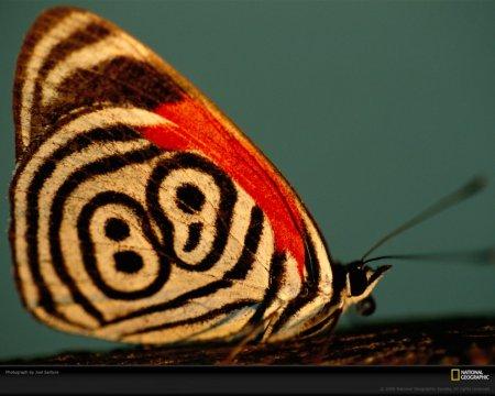 Узоры природы: Бабочки