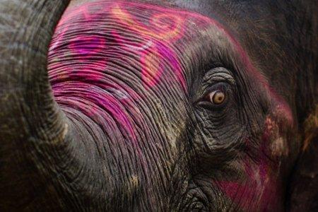 На ярмарке слонов