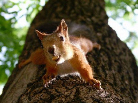 Позитивные фотографии прелестных животных (45 шт)