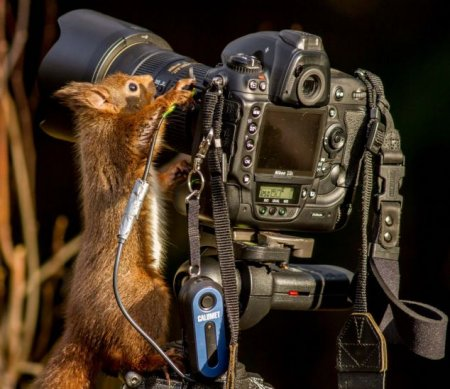 Белочка наедине с фотокамерой