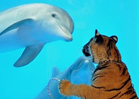 Пингвин и тигр в океанариуме (5 фото)