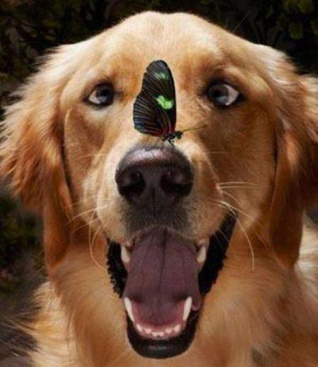 Фотографии с забавными животными (34 шт)
