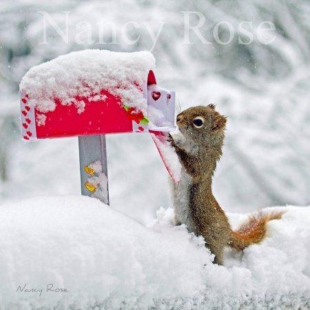 Беличьи забавы в фотографиях Нэнси Роуз