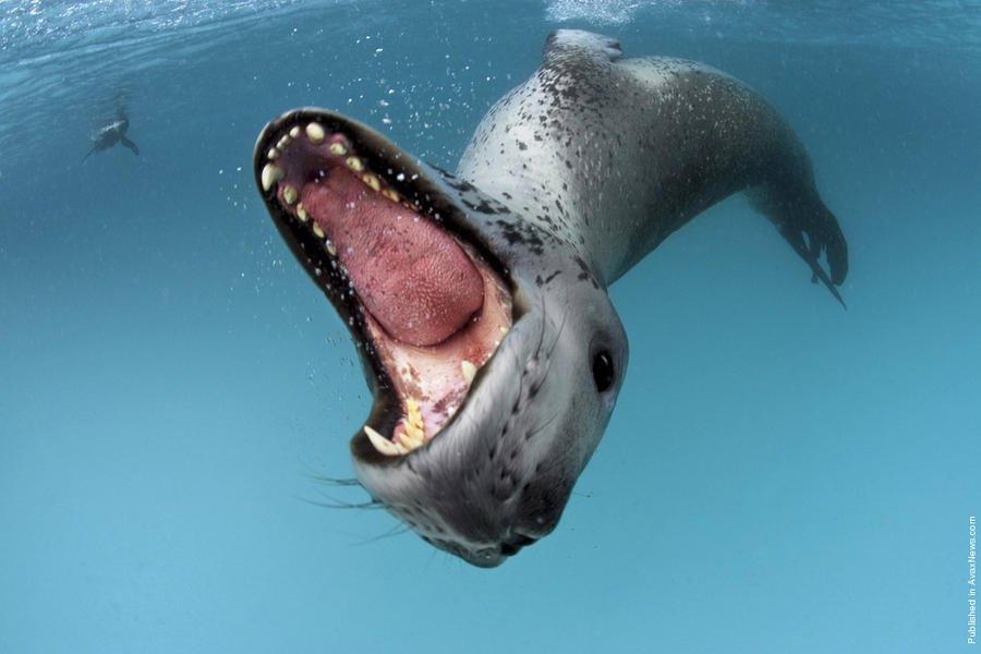 Скачать видео обитатели антарктиды фото 496-933
