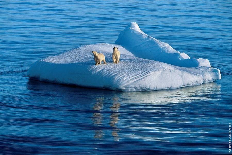 Скачать видео обитатели антарктиды фото 496-681