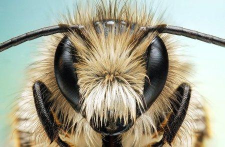 Макрофотографии насекомых  (19 фото)