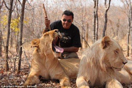 Прогулка с хищниками в заповеднике Mukuni Big 5 Safaris (12 фото)