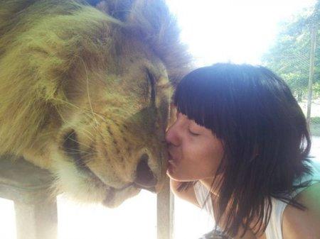 Ручные хищники зоопарка Лухан (13 фото)