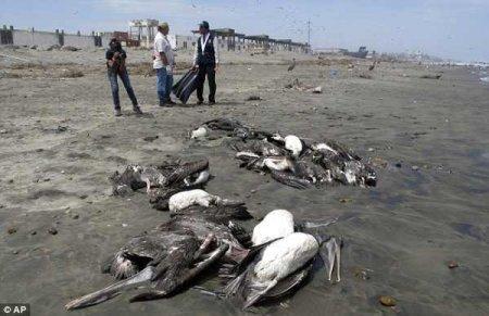 10 Случаев таинственных массовых смертей животных