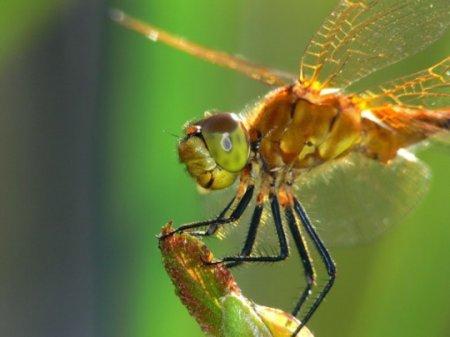 10 На удивление устрашающих фактов о стрекозах