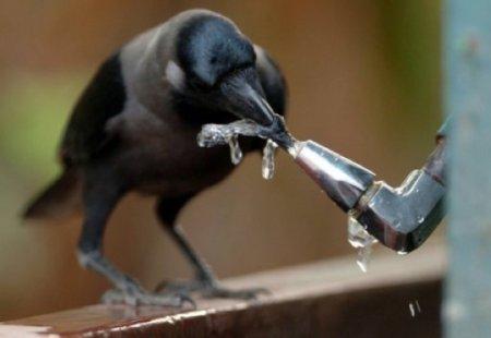 10 Интересных способов, которыми животные используют различные предметы