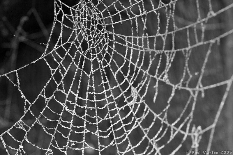 все пауки плетут паутину,