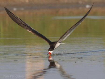 10 Странных методов охоты и питания птиц