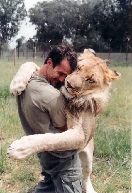 Невероятная дружба человека и львов (13 фото)