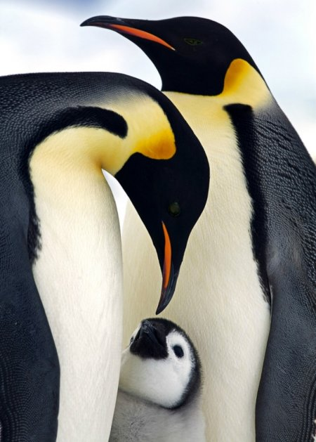Удивительные фотографии птиц (17 шт)