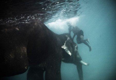 Купание слонов (5 фото)