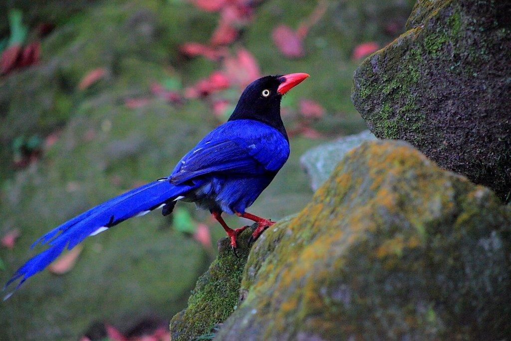 фото сороки птицы