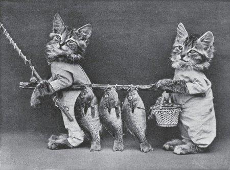Забавные ретро-фотографии котят и щенят (17 шт)