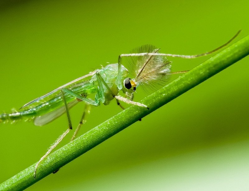 какие хорошо знакомые нам насекомые