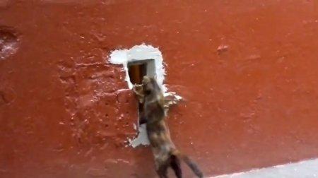 Кошка, добыча и узкое отверстие